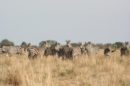 Seeing, and Saving, Serengeti National Park