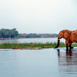 Zambian Safari: Paddling the Zambezi