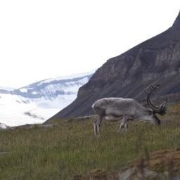Spitsbergen Island, Svalbard, Norway